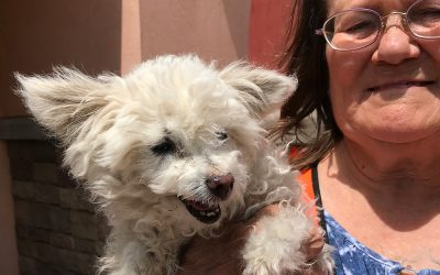 16 Year Old Poodle Lost After Monsoon Storm