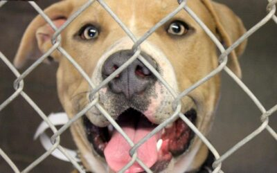 Setting the Record Straight On Pet Surrender Increases