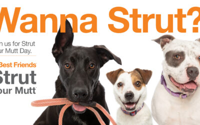 2021 Strut Your Mutt Day